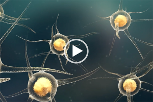 Boyalife stem cell animation
